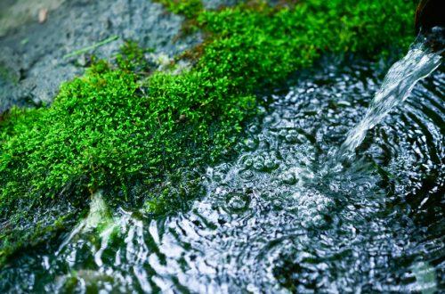 湧き水の写真